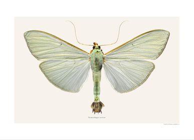 Poster - Moth Art prints - LILJEBERGS