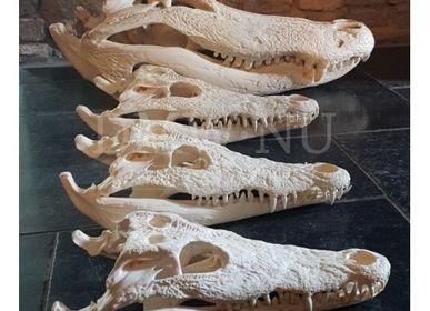 Objets de décoration - Crâne de crocodile - objet décoratif - DMW.NU: TAXIDERMY & INTERIOR