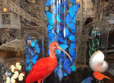 Unique pieces - Taxidermy scarlet ibis - DMW.NU: TAXIDERMY & INTERIOR