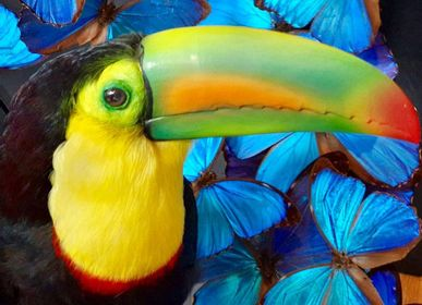 Decorative objects - Toucans and more - Decorative objets - Interior & Taxidermy - DMW.NU: TAXIDERMY & INTERIOR