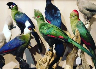 Sculpture - Touraco decoration - Taxidermy & Interior - DMW.NU: TAXIDERMY & INTERIOR