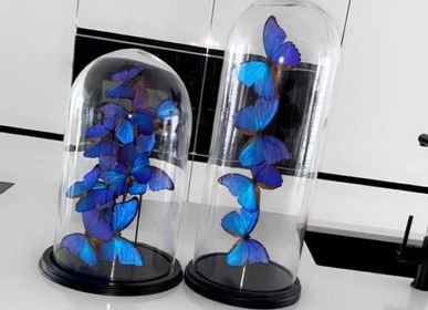 Other wall decoration - Morpho Didius - DMW.NU: TAXIDERMY & INTERIOR