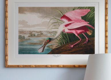 Decorative objects - Framed art: Roseate Spoonbill - G & C INTERIORS A/S