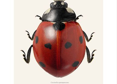 Decorative items - Other bugs - LILJEBERGS