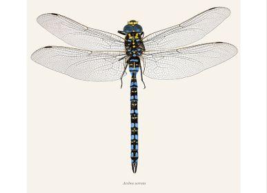 Affiches - Autres bugs - LILJEBERGS