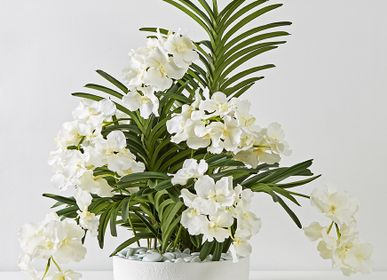 Floral decoration - WHITE VANDA CUP - LOU DE CASTELLANE