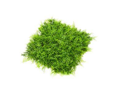 Murs végétaux - UV-Collection - Mur Vert - Tapis de fougère résistant aux intempéries 50x50cm - EMERALD ETERNAL GREEN BV