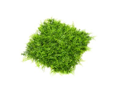 Green walls - UV-Collection - Green Wall - Fern Mix Mat Weather Resistant 50x50cm - EMERALD ETERNAL GREEN BV