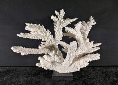Objets de décoration - Corail sur socle, cabinet de curiosités - METAMORPHOSES