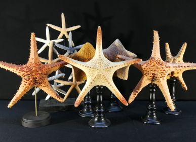 Decorative objects - Starfish - METAMORPHOSES