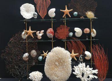 Objets de décoration - Gorgone sur socle, objet de curiosité - METAMORPHOSES