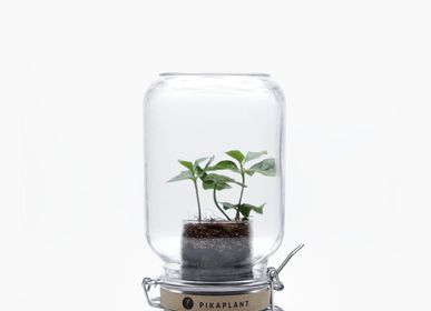 Gift design - Jar Coffea 2.0 - PIKAPLANT