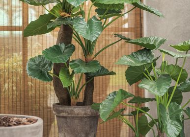 Décoration florale - Alocasia plant - Silk-ka Artificial flowers and plants for life! - SILK-KA