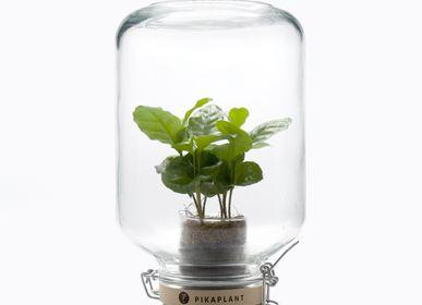 Chambres d'hotels - Jar Coffea 5.0 - PIKAPLANT