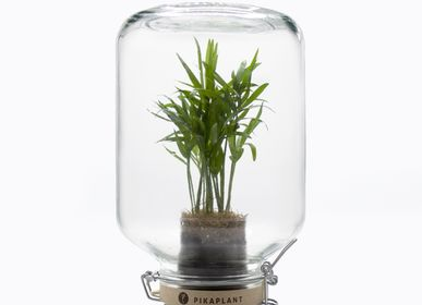 Art glass - Jar Chamaedorea 5.0 - PIKAPLANT