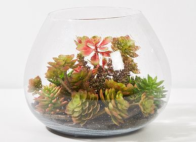 Floral decoration - TERRARIUM - LOU DE CASTELLANE