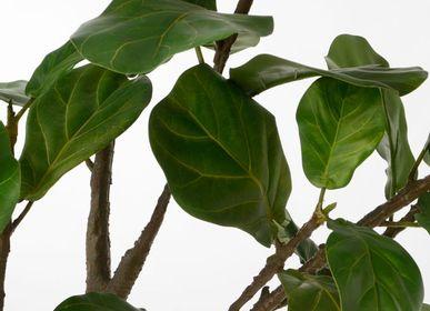 Décoration florale - Plante FICUS LYRATA - LOU DE CASTELLANE