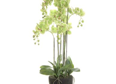 Décoration florale - Composition Orchidées Verts - ASIATIDES