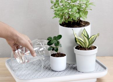 Flower pots - Oasis Tray : Recycled Plastic Self-Watering Plant Glass Tray for indoor and outdoor garden - QUALY DESIGN OFFICIAL