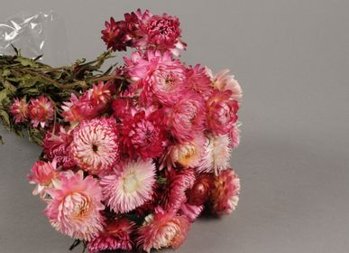 Hair accessories - Natural dried immortelle pink H46cm - LE COMPTOIR.COM