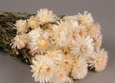 Creative hobbies - Natural dried immortelle white - LE COMPTOIR.COM