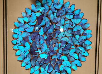 Wall decoration - Large double glass morpho frame - DESIGN & NATURE