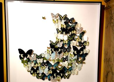 Decorative objects - Moon Shaped Butterfly Frame - DESIGN & NATURE