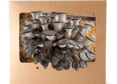 Delicatessen - Organic grey oyster mushrooms growing kit. - RADIS ET CAPUCINE