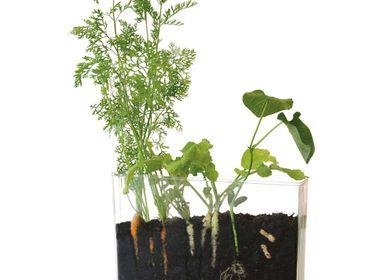 Creative Hobbies - Vivarium - Observation of roots and earthworms - RADIS ET CAPUCINE