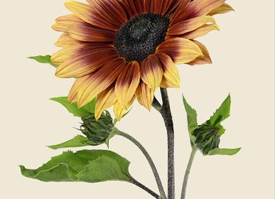 Floral decoration - Botanical art prints - LILJEBERGS