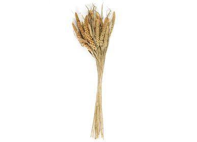 Floral decoration - Setarea natural dried flower bouquet 100 gr AX21027 - ANDREA HOUSE