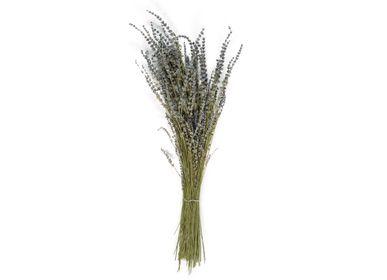 Décorations florales - Lavanda bouquet naturel de fleurs séchées 80 gr AX21028  - ANDREA HOUSE
