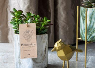 Gifts - Succulents dans un marble hexagon noir/blanc - PLANTOPHILE