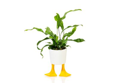 Gifts - Bitten Duck Feet Planter - BITTEN