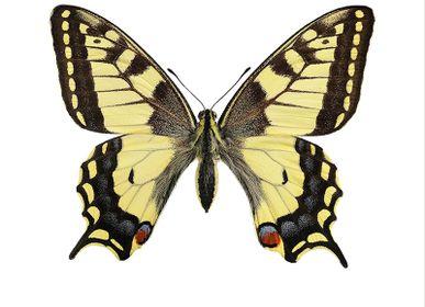 Art photos - Butterflies - LILJEBERGS