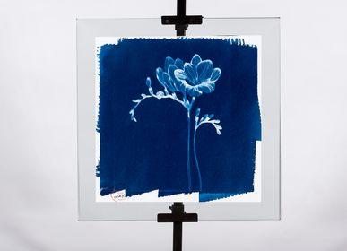 Photos d'art - Cyanotype La Fleur - LILY BLANCHE