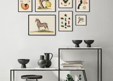 Affiches - AFFICHE I Coffret cabinet de curiosités murales - LES JOLIES PLANCHES