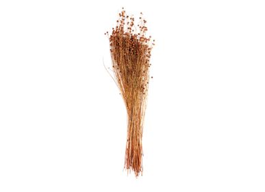 Floral decoration - LINO NATURAL DRIED FLOWER 100 GR. AX71136 - ANDREA HOUSE