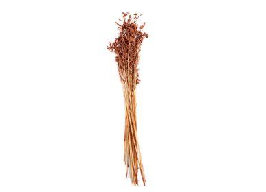 Décorations florales - Fleur séchée naturelle Orange Avena. 100 gr, 80 cm AX71139  - ANDREA HOUSE