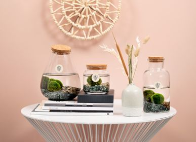 Decorative objects - Marimo - special product with a special story  - PLANTOPHILE