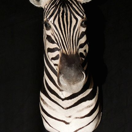 Decorative objects - Zebra bust - AFRICAN GALLERY