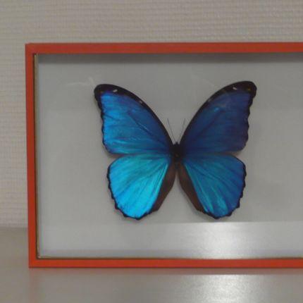 Objets de décoration - coffrets vitrés - LA CHARNIÈRE ROUGE