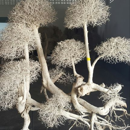 Unique pieces - dried tree - DÉCORAMA
