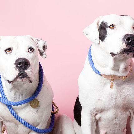 Decorative accessories - Pet Accessories  - FOUND MY ANIMAL
