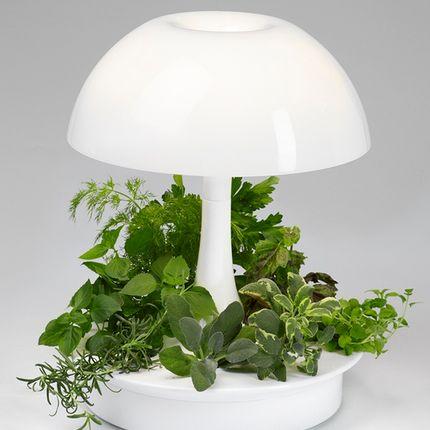 Lampes de table - Lampe végétal - GLOP STUDIO