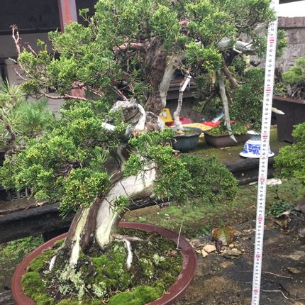 Quincallerie d'art - Bonsai Art - JAPAN HORT