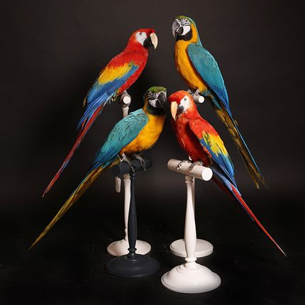 Decorative objects - Birds - DESIGN & NATURE