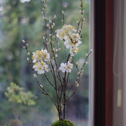 Floral decoration - Majikku Plant - AQUAPHYTE