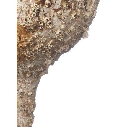 Decorative accessories - Amphora model 21 Betica. - ANFORAS DE MAR