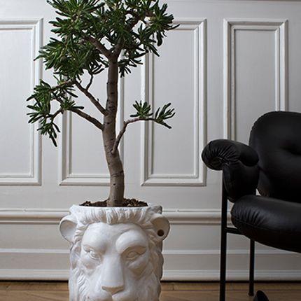 Accessoires de jardinage - Lion and Monkey Face pot - GARDEN GLORY